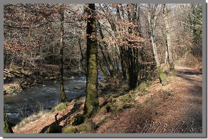 Michka, Forêt de Blanchefort