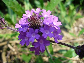 080221_Autres_fleurs