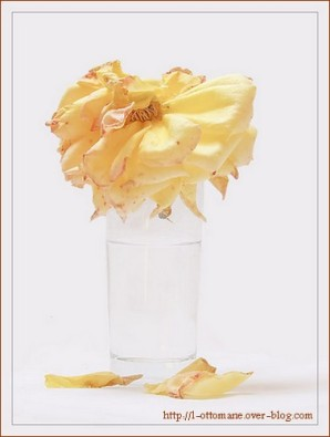 http://l-ottomane.over-blog.com/article-la-derniere-rose-jaune-du-jardin-40962702.html