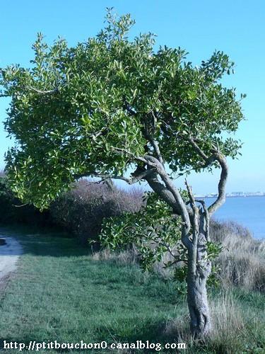 100102_Pbc_arbre.jpg