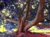 Le quichottinier de Liliflore