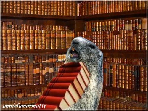 Le poids de la culture chez Annie la Marmotte