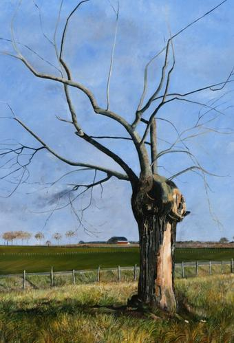 L'arbre d'Azalaïs, avril 2008