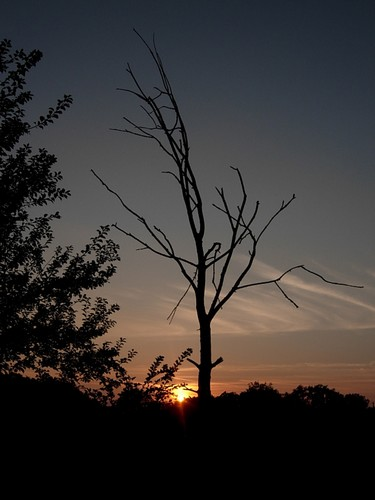 Alphomega, Silhouette crépusculaire