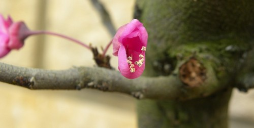 Les fleurs de l'arbre de Brigitte