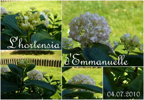 100704_Hortensia