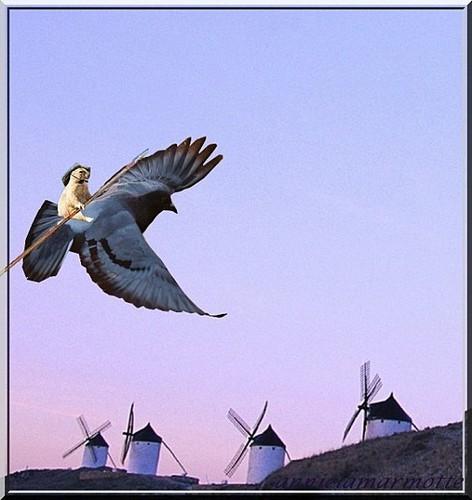101026_Annie-la-marmotte_Faire-voler-Quichottine.jpg