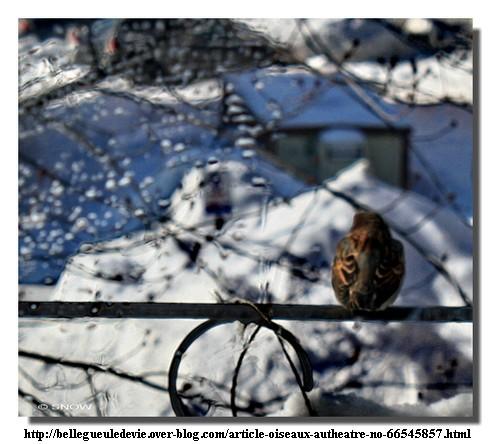 110203_Snow_Moineau.jpg