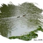110818_Versailles_8