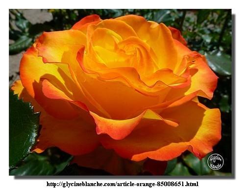 110924_Glycine-Blanche_3.jpg