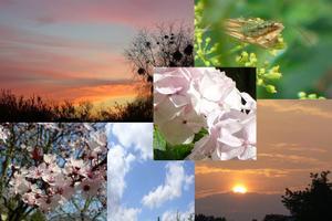 montage de photos de Quichottine