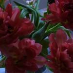 130329_Fleurs_d-amitie