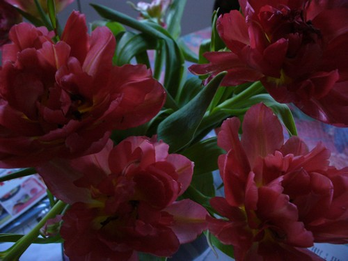 130329_Fleurs_d-amitie.jpg