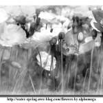 D'après une photographie d'alphomega