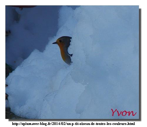 """""""Un p'tit oiseau de toutes les couleurs"""" par Yvon, 4 février 2014"""