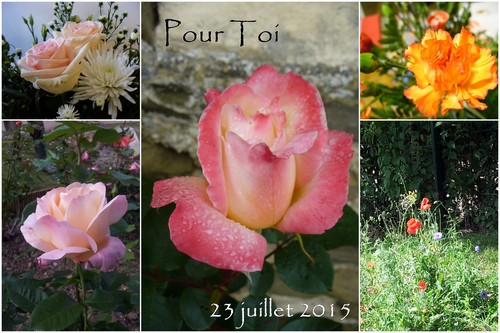 150723_Les fleurs du vendredi