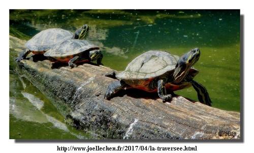 170404_Joelle Chen