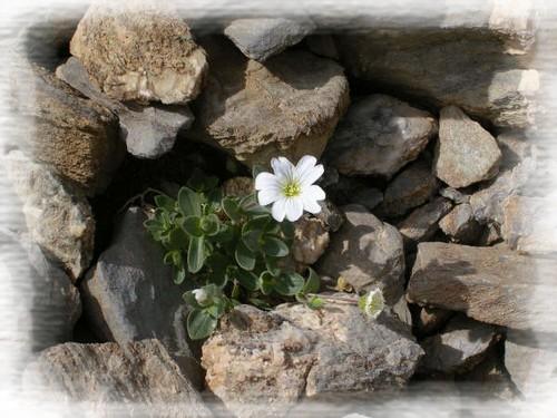 170615_Anne A_fleurs