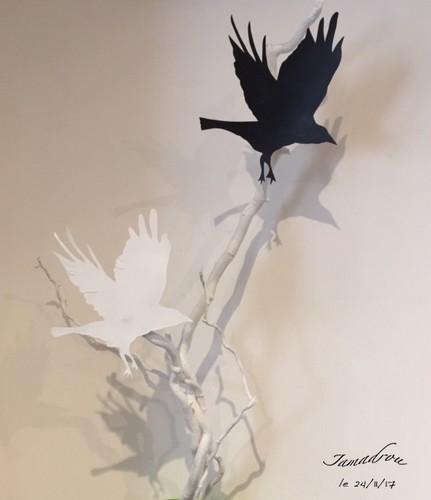 171127_oiseau-blanc-oiseau-noir