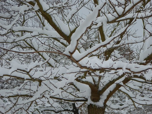 180210_neige